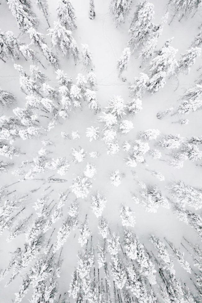 bomen in Lapland van bovenaf genomen met drone