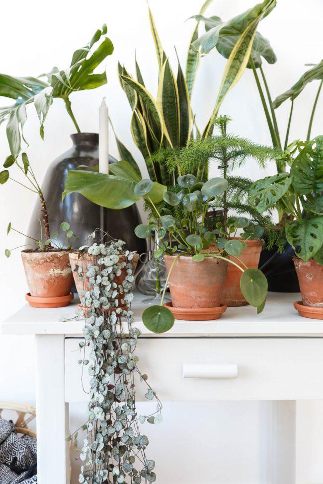 huiskamerplanten in potten